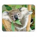 Podložka pod myš, Koala na stromě, PVC, 22cmx18cm, 0.3cm, Logo